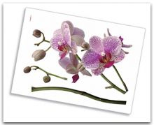 10sticker-orchidee.jpg